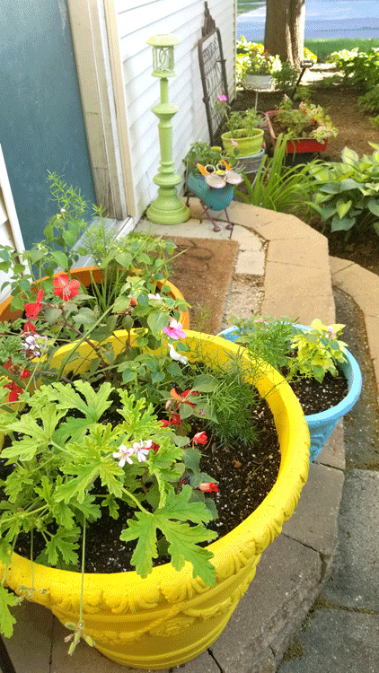 looking down on the three large painted planters by the back door.