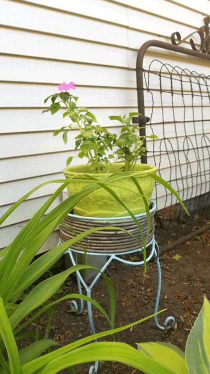 The ceramic pot painted succulent green with impatients sitting in a teal metal plant stand.