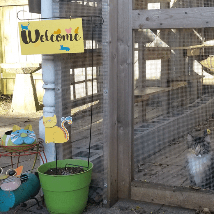 The finished welcome sign with a kitty in the background enjoying the catio.