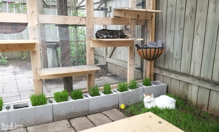 The inside of the catio with 2 cats relaxing in the outdoors.
