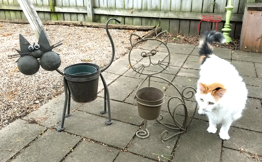 Metal outdoor cat shaped planters before being painted.  They are brown and boring.